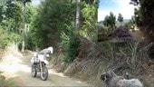 Montone aggredisce motociclista - IL VIDEO