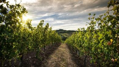 Sagre, si festeggia tra vini e sapori di mare